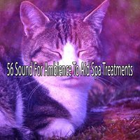 56 Sound For Ambience To Aid Spa Treatments — Dormir
