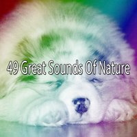 49 Great Sounds Of Nature — Dormir
