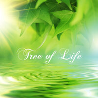 Tree of Life New Age Piano Music for a New Era — New Age Piano of Innocence