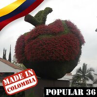 Made In Colombia: Popular Vol. 36 — сборник