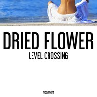 Level crossing — Dried Flower