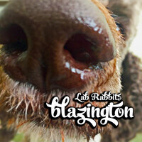 Blazington — Lab Rabbits