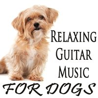 Relaxing Guitar Music for Dogs — Steve Petrunak, Dog Music