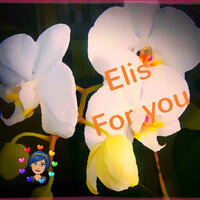 For You — Elis