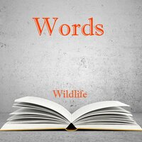 Words — Wildlife