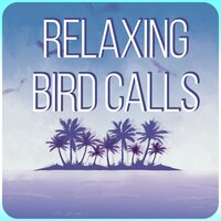 Relaxing Bird Calls - Amazing Sound Effects of Birds, Forest Ambience, Morning Bird Calls for Relaxation — Lovely Nature Music Zone