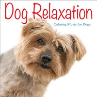 Dog Relaxation: Calming Music for Dogs — Jay Oliver