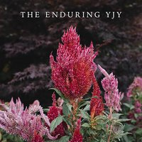 The Enduring YJY — YJY