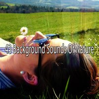 43 Background Sounds Of Nature — Asian Zen Spa Music Meditation