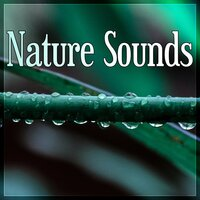 Nature Sounds - Sound Therapy for Stress Relief, Relax Your Brain, Finest Chillout & Lounge Music, Massage, Reiki — Lovely Nature Music Zone