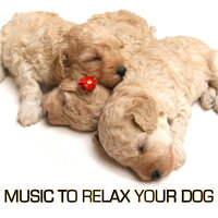 Music to Relax Your Dog — сборник