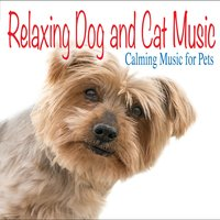 Relaxing Dog and Cat Music: Calming Music for Pets — Jay Oliver