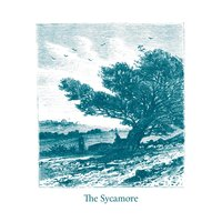The Sycamore — The Sycamore