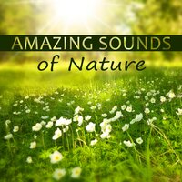 Amazing Sounds of Nature – Soft Music for Healing, Music Background for Relax, Deep Sounds for Meditation, Ocean Waves Sounds, Calm Music for Relaxation — Lovely Nature Music Zone