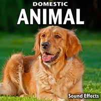 Domestic Animal Sound Effects — Sound Ideas