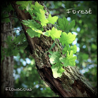 Forest — Flowscious