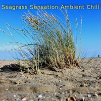 Seagrass Sensation Ambient Chill (Vol. 1) — сборник