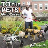 To the Pets — Handicappedpets