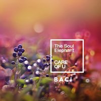 Care of U — The Soul Elephant