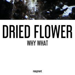 Why What — Dried Flower