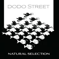 Natural Selection — Various Composers, Dodo Street