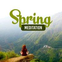 Spring Meditation: Best Collection of Nature Sounds, Forest, Birds