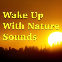 Wake Up With Nature Sounds — сборник