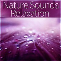 Nature Sounds Relaxation - Peaceful Music with Nature Sounds, Meditation and Stress Relief, Sound Healing Meditation Music Therapy for Relaxation, Chakra Healing, First Steps Hypnosis — Relaxing Nature Sounds Collection