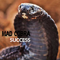 Success — Mad Cobra