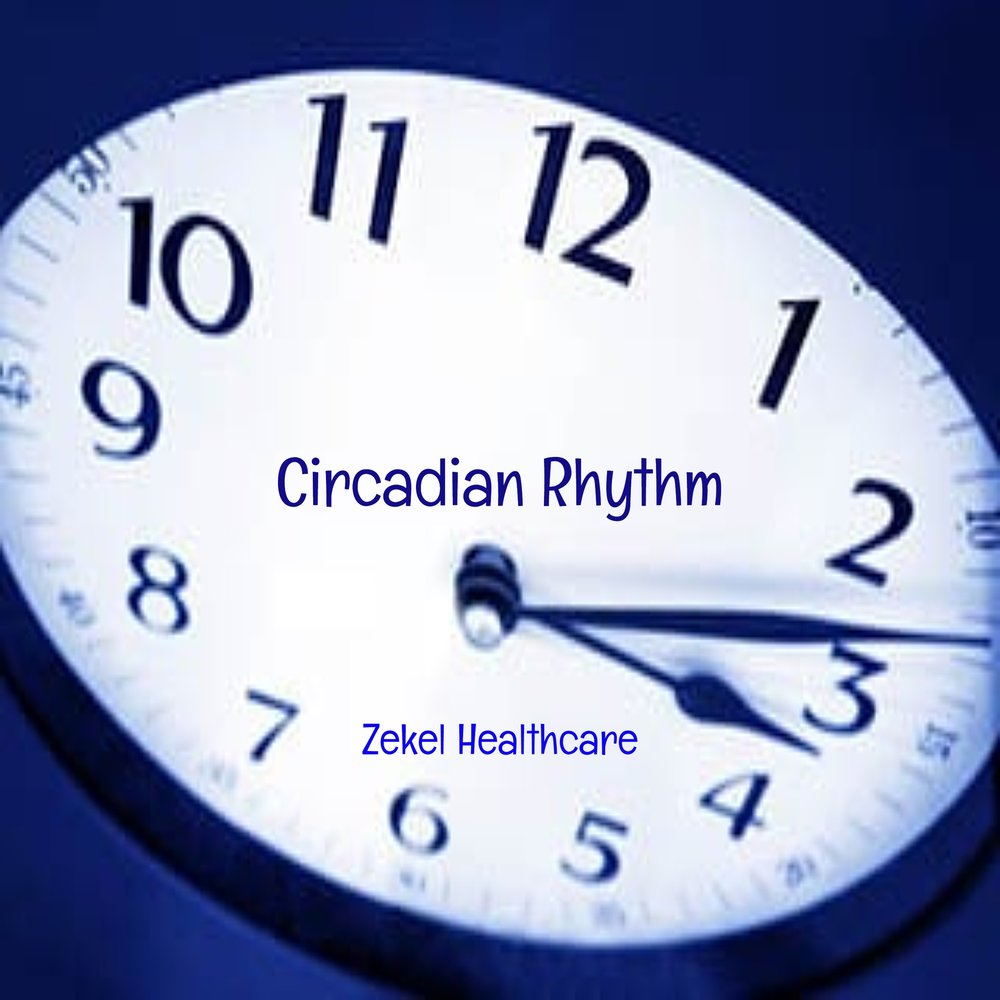 outline the circadian rhythm 8 The idea of circadian rhythms concept in human physical performance has been extensively researched[1, 2,3] physical activities involving aerobic and anaerobic fitness have displayed a clear circadian rhythms[4, 5, 6.