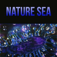 Nature Sea - The Natural Music for Healthy Living, Positive for the Day with Emotional Music, Gentle Massage, Lullaby Soothing Sounds — Soothing Music Academy