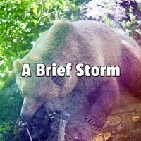 A Brief Storm — Thunderstorms