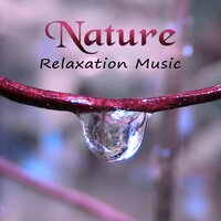 Nature Relaxation Music – Positive Melodies, Ocean Healing, Therapy Music — Beautiful Nature Music Paradise