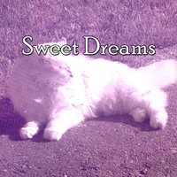 Sweet Dreams — Monarch Baby Lullaby Institute
