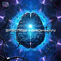 Brain Evolution — Specree, Browkan, Browkan, Specree