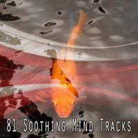 81 Soothing Mind Tracks — Meditation