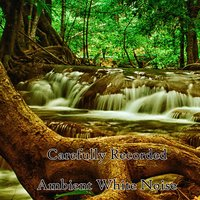 Carefully Recorded Ambient White Noise — Ambient Forest, Ambient Rain, Ambiente