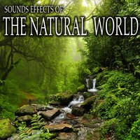 Sound Effects of the Natural World — Sound Ideas