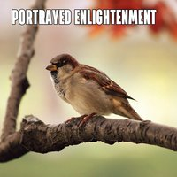 Portrayed Enlightenment — Sounds of Nature Relaxation