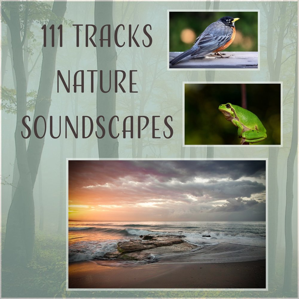 111 Tracks Nature Soundscapes: Healing Therapy Music - Relaxing Rain