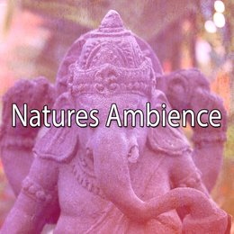 Natures Ambience — Ambient Forest