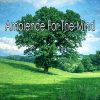 Ambience For The Mind — Ambient Forest