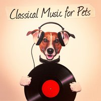 Classical Music for Pets — Classical Chillout Radio, The Einstein Classical Music Collection for Baby, Classical Music Songs