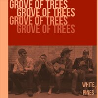 White Pines — Grove of Trees