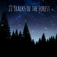22 Tracks of the Forest — Rain Sounds