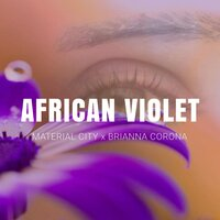 African Violet — Material City