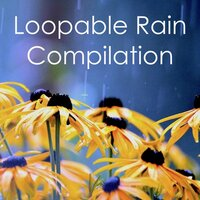 Huge Loopable Rain Compilation — Rain for Deep Sleep, Yoga, The Rain Library