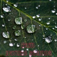1 Hour of Rain and Nature Sounds an Ambient and Relaxing