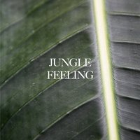 Jungle Feeling — Moss, AMB