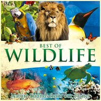 Best of Wildlife - Nature Sounds from Our Planet — Global Journey